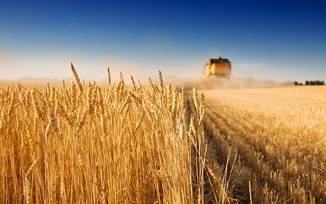 Servicios de análisis dedicados al sector agrícola