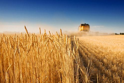 11 - Corso di formazione per responsabile industria alimentare (20 ORE)