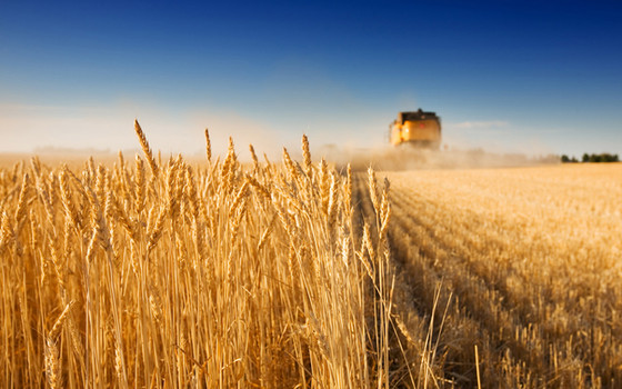 A season of harvest