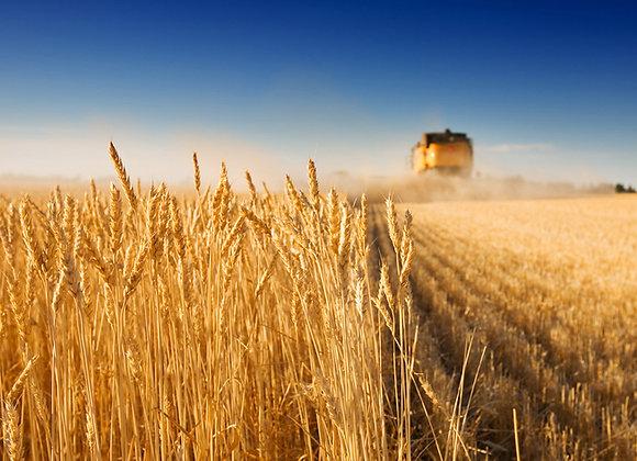 Выращивание пшеницы | финансовая модель бизнес плана