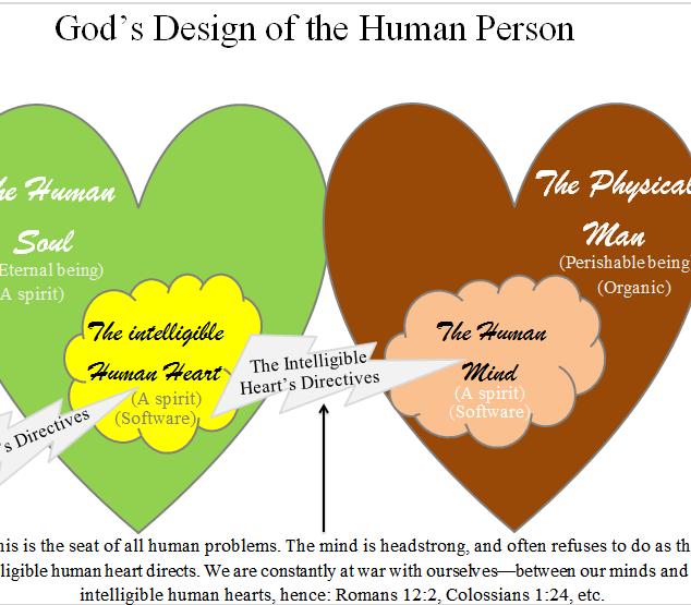 physical vs spiritual man.png
