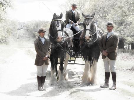 Festive Horse Drawn Carriage Rides