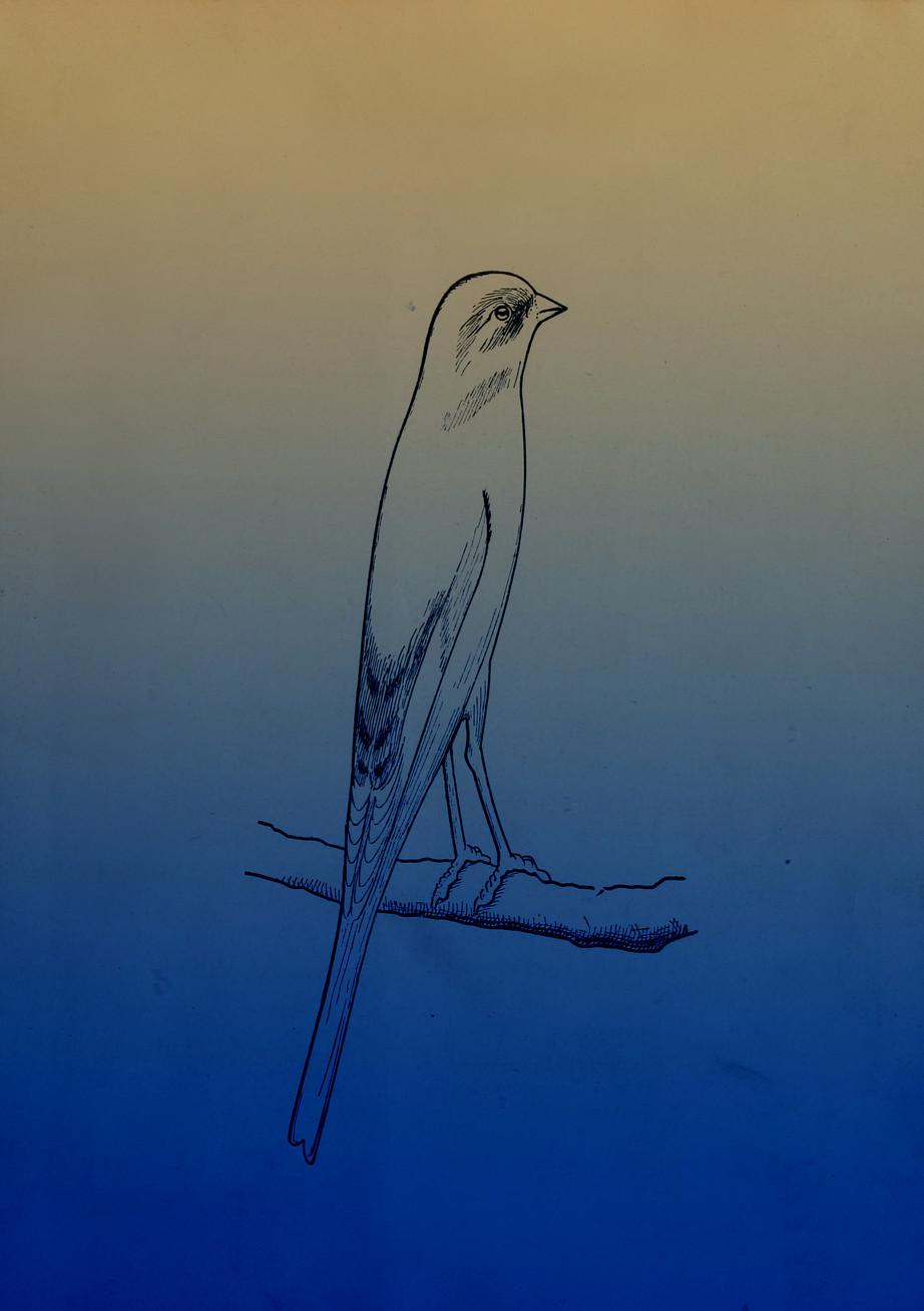 """""""人们常问鸟是如何受到空气的影响"""" - Hanna Husberg的个人项目"""