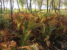 Kent Land Trust - Tobin Preserve1.JPG