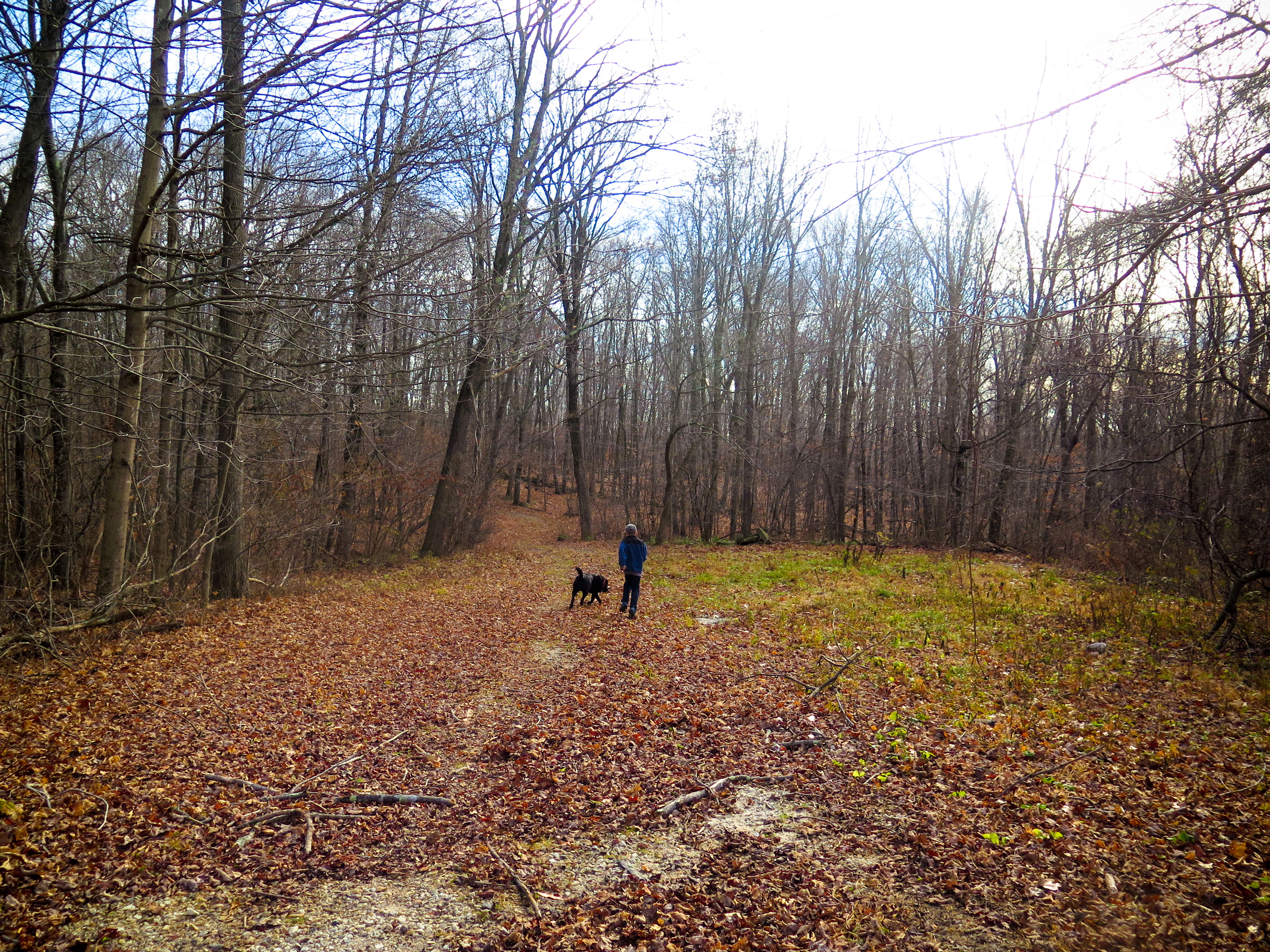 OptOutside Hike at EKHNP 11-27-15 - Aiden with Perry run ahead