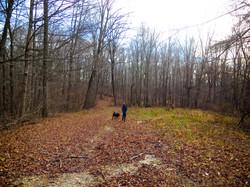 OptOutside Hike at EKHNP 11-27-15 - Aiden with Perry run ahead