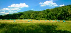 Leinoff Farm Field hay harvest June 2 2013