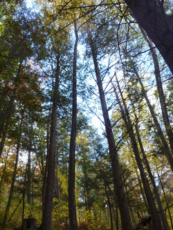 Tobin Preserve Forest 2 Oct 2015 LDoss_edited