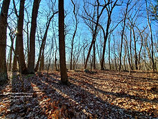 The Nature Conservancy - Iron Mountain P