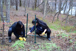 Marvelwood students plant tree at Skiff Mountain South