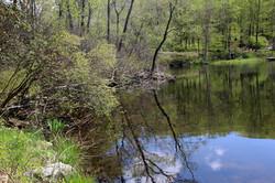 Beeman Pond 2- Sallie Ketcham June 2014