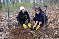 Marvelwood students plant tree at Skiff Mountain South 2