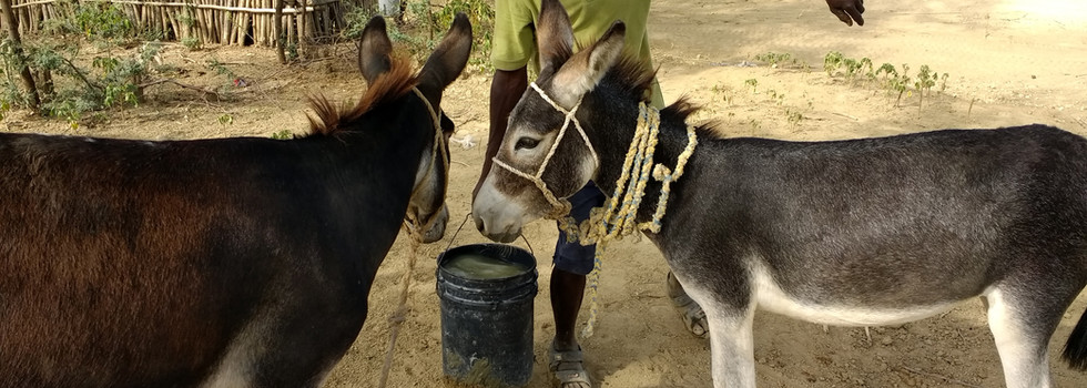Water often needs to be hauled in buckets from miles away using donkeys or your head. Lemuel is working to provide local water, a constant struggle.