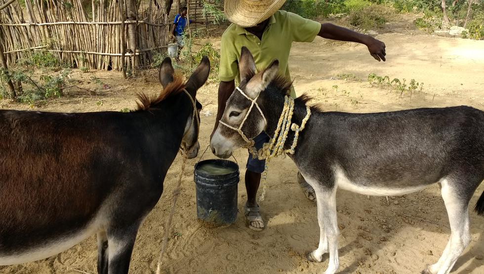 Water often needs to be hauled in buckets from miles away using donkeys or your head.Lemuel is working to provide local water, a constant struggle.