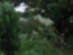 Captura_de_Tela_2020-07-31_às_15.32.26