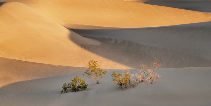 Sand Dunes 14