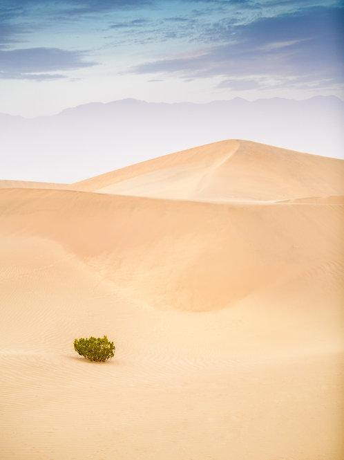 Mesquite Sand Dunes 9