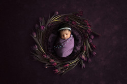 forget me not newborn photography manche