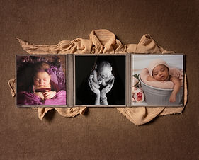 forget me not newborn photography gold