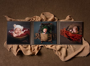 forget me not newborn photography bronze