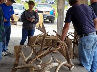 2017 Elk Antler Shed Hunt