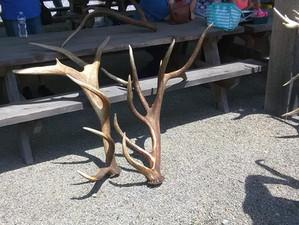 2018 Elk Antler Shed Hunt