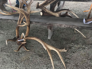 2019 Elk/Deer Antler Shed Hunt Scoring