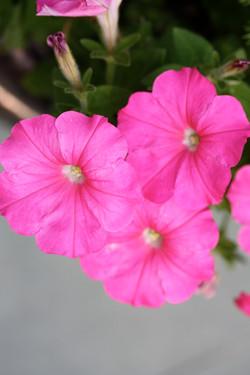Seasonal Colors 1311.jpg