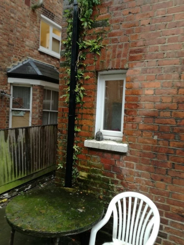 Damp brickwork and blocked downpipe