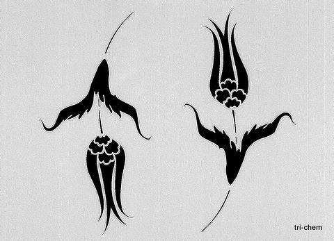 Two Tulip