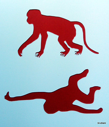 Afrika Affen