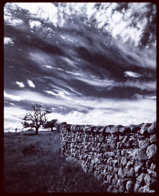The wall on Holme Park Fell.