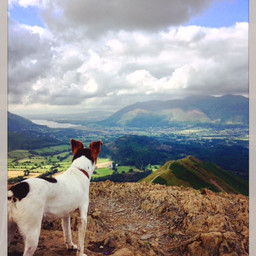 A walk up to Catbells in July 2016. Looking over to Skiddaw.