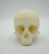 Model czaszki dziecka