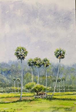 Palm Fields