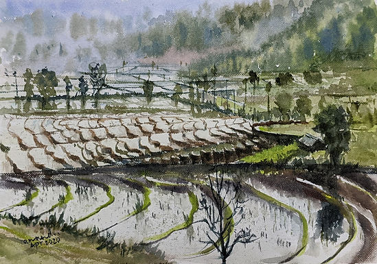 Terrace Cultivation