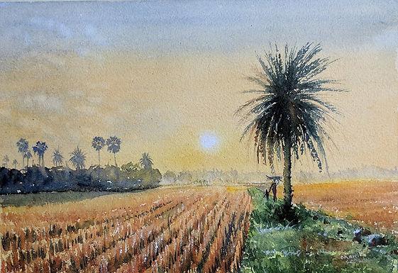 Lone Date Palm
