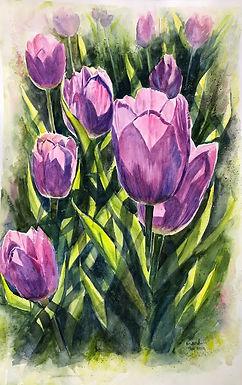Translucent Tulips