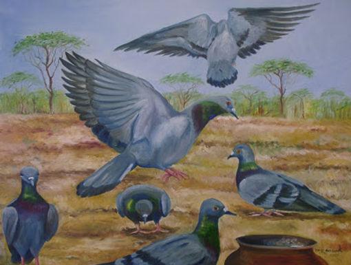 Pigeon Meet
