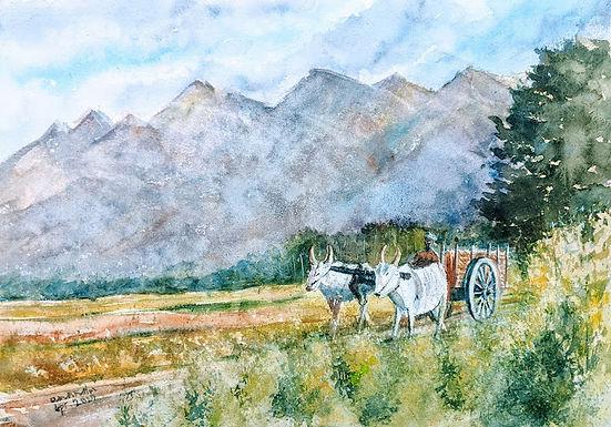 Rustic Rural