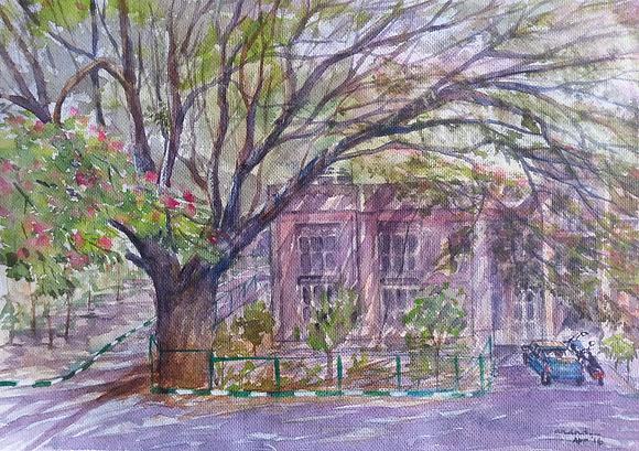 Rain tree / 5 o'clock tree