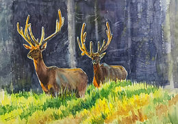 Elks in Velvet