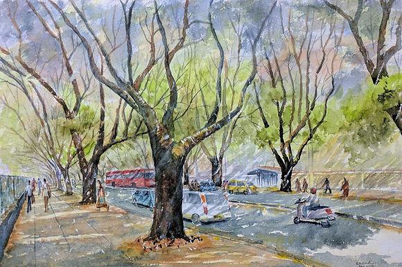 Rain Tree Boulevard