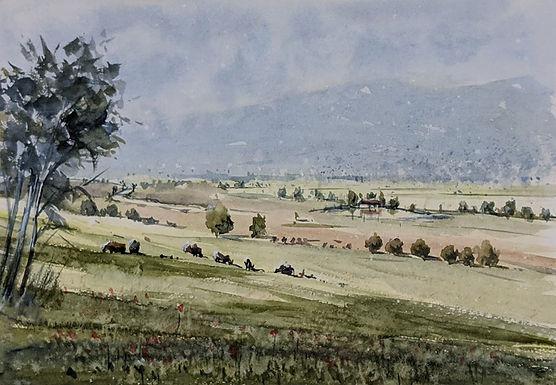 Grazing Fields