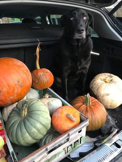 Alright-Pumpkin-display