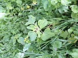 10 spiecies crop.jpg