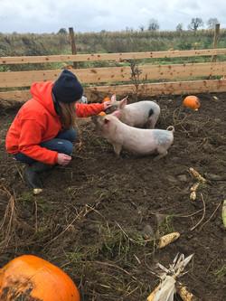 Alright-Pumpkin-piglets