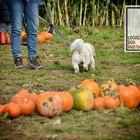 pick your own pumpkins puppy