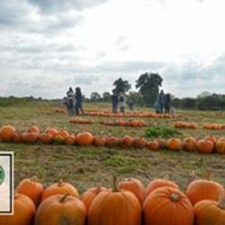pumpkin pickers having fun