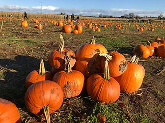 Alright-Pumpkin-Meath-pick-your-own-patc